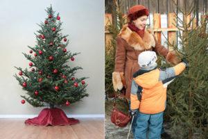 Как сделать, чтобы живая елка стояла долго